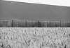 VooRRaad. (Warmoezenier) Tags: akker landbouw schuur zwart wit negro blanco black white zeeland noord beveland kortgene farm