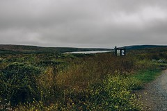 Bull Point Trailhead (LauraJSwindle) Tags: california norcal nikond7100 ca wildflowers flower fleur 2016 nature september landandwaterscaoe yellows hat bullpointtrailhead foliage botanical landscape bayarea northerncalifornia overcast floral green cloudy gloomy plants places wantagh ny usa