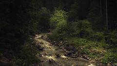Kleinwalsertal (Netsrak (on/off)) Tags: breitach forst kleinwalsertal landschaft natur sommer wald wildbach creek forest landscape nature summer tree trees woods bäume
