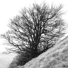 Vivere in montagna (mttdlp) Tags: appennino allaperto montagna mountain monte nikon albero tree pendenza salita bianco nero bw black white grass erba monochrome high key