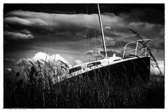 Schiff Silver Efex