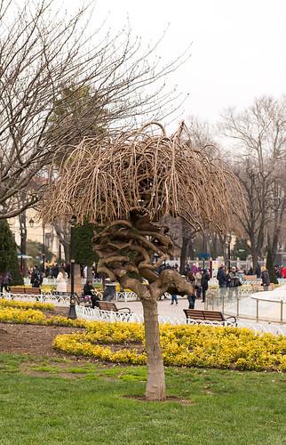 The tree ©  Andrey