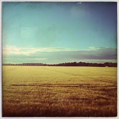 Korn (Casey Hugelfink) Tags: summer sky field yellow landscape bayern bavaria corn sommer wheat himmel landschaft korn kornfeld getreide gerste feldkirchen weizen