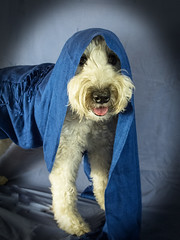 Favorite color, blue (Eric.Ray) Tags: blue dog animal canon project point photo shoot daily doghouse challenge g12 doglovers 344365