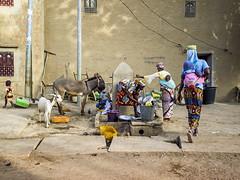 dishwashing (Mark Panszky) Tags: baby water animals women donkey well westafrica dishes mali washing djenne