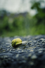 snail on rocks (RuinOfDecay!) Tags: city nature rain raw colorfull natur snail stadt 1855mm regensburg ratisbon schnecke regen bunt ratisbona canoneos60d ruinofdecay