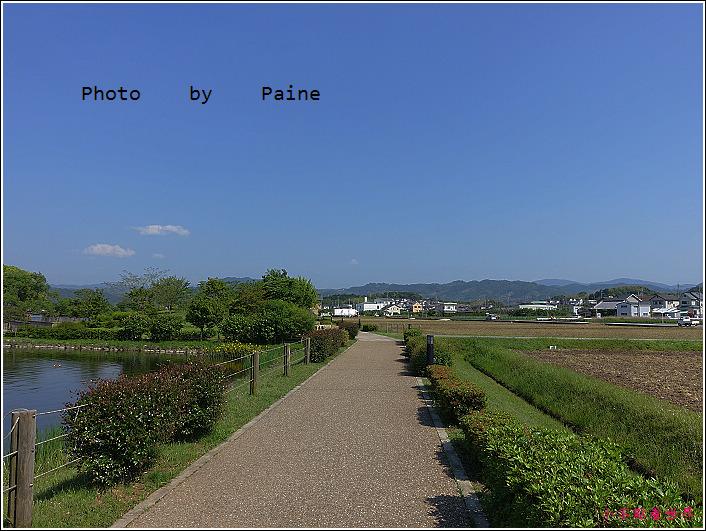 和歌山大池遊園-平池綠地公園 (35).JPG