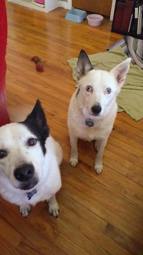 My Canine Girls