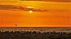 world-wide (yakkay43) Tags: portugal panorama lifestyle sunrises adventurous love new colour craft atlantic sunset