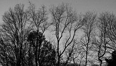 Shadow  Silhouettes (chantsign) Tags: silhouette branches constrast bare shy grey lines