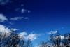 Cielo azul (Miguel Angel Prieto Ciudad) Tags: sky sunset blue sun light clouds trees abstract cloud ngc