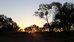 2016.11.17.05.30.21-Lake Drive sunrise (www.davidmolloyphotography.com) Tags: newsouthwales menindee kinchega kincheganationalpark