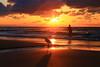 Bathing at sunset - Tel-Aviv beach (Lior. L) Tags: bathingatsunsettelavivbeach bathing sunset telaviv beach silhouettes reflection bird egretagazeta travel nature telavivbeach israel travelinisrael wildlife clouds cloudysunset