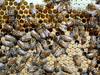 Nurse bees on capped brood (closeup macro) (nicephotog) Tags: european honeybee bee apis mellifera comb brood hive beehive nurse larvae closeup macro cell