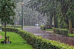 2013 Rain (Steenvoorde Leen - 2.9 ml views) Tags: 2013 rain straat doorn utrechtseheuvelrug weer weather