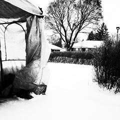Voulez-vous camper dans le jardin ?... (woltarise) Tags: tempo montréal rosemont protection neige abri voiture