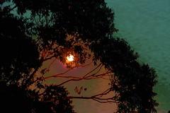 Bulla Full Moon! (maginoz1) Tags: abstract art manipulate luminosity landscapes cloud moon trees skyscape summer january 2017 bulla melbourne victoria australia canon g3x