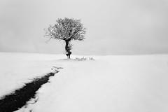 Lorca (Miguel Ángel Giménez-Murcianico) Tags: nieve lorca snow minimalista minimal