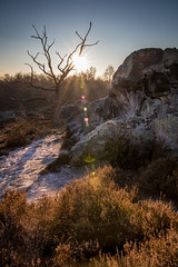 Hottée du diable (holding_justin) Tags: extérieur outdoors picardie picardy france north europe bruyère heather sun soleil couchant sunset glow golden formationrocheuse rocks stone limestone sable sand arbre tree mort dead frondt givre hiver winter tokina eos80d canon