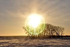 January 13, 2017 (Jeannette Greaves) Tags: 2017 winter snow sundog sun cold
