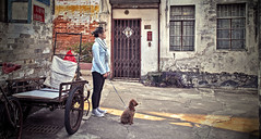 The S Series - V1 (The Brickest) Tags: girl dog woman street china alley oldtown guangdong dongguan guancheng converse