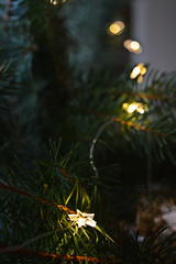 Christmas constellation (MonieHoleva) Tags: constellation christmas lights fairylights star tree style decoration photography photographer girl blonde slovensko slovakia nikon winter needles ornaments
