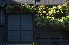 DSC_8030 (kingfisher001) Tags: alpesjaponaises edo exposition festival gifu higashiyama ichinomachi japan japon jinya kanamori miyagawa muromachi musées nonomacha sakurayamahachiman sammachi sanmachisuji sannomachi takayama takayamajinya tokugawa anciennes automne bois bâtisses centre chars demeures distilleriesdesaké geisha geishas gouverneurs historique maisons marchéjinyagawa marchés pommes quartier rivière résidence salle sanctuaire seigneur shogunat temples ville