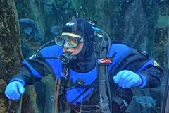 Here Fishy, Fishy (Kirt Edblom) Tags: fish ford oregon aquarium nikon nikki tunnel scuba diving newport wife grandkids scubadiving sharks oregoncoast hdr oregoncoastaquarium newportoregon gaylene easyhdr steveford orfordreef loriford nikond7100