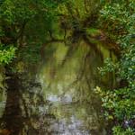 Glendalough Walk 1 thumbnail