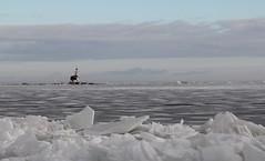 vuurtoren (lighthouse), paard van Marken, Marken, Netherlands (CBP fotografie) Tags: winter lighthouse holland ice netherlands landscape nederland vuurtoren marken landschap noordholland ijs northholland driftingice kruiendijs paardvanmarken