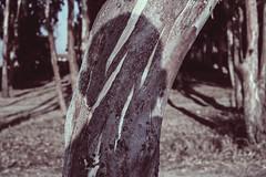 Self-portrait (RobyMontis) Tags: portrait selfportrait tree colors myself cut io silence autoritratto albero colori ritratto silenzio secondo mestesso tagli i ritrattistica
