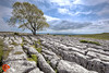 The lone tree (Fred255 Photography) Tags: uk england canon landscapes ashtree limestone hdr northyorkshire malham manfrotto yorkshiredales limestonepavement markiii llens malhamlings platinumheartaward canoneos1dsmarkiii ef1635mmf4lisusm ©fred255photography2015
