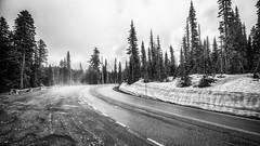 Bitter Cold (writing with light 2422 [not pro}) Tags: mountrainiernationalpark richborder blackandwhite landscape trees snow roadside sonya77 sigma 1020mm