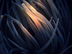 Another World IV (dono heneman) Tags: another autre world monde algue alga sousmarin aquatique aquatic subaquatique macro végétal vegetal végétation eau water filament lumière light mediterranée cambrils catalogne espagne olympus tg850 nature