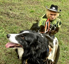 """""""I couldn't find a horse"""" ~ Watch: (Shein Die) Tags: clarksdale monkey dog festival jukejointfestival mississippi"""