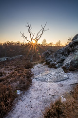 Hottée du diable 2 (holding_justin) Tags: extérieur outdoors picardie picardy france north europe bruyère heather sun soleil couchant sunset glow golden formation rocheuse rocks stone limestone sable sand arbre tree mort dead frondt givre hiver winter tokina eos 80d canon calme