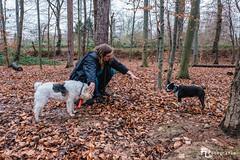 Frauchen und ihre Hunde