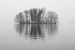 flying island (LB-fotos) Tags: 55mm deutschland germany insel nebel plön see chinon lake dust black white bw blackwihte schwarz schwarzweiss weiss weis sw trees bäume water wasser