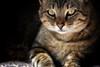 Mi foto más popular 2016 (Japo García) Tags: gato popular japo foto animal retrato portrait interesante mirada ojos felino sombra calma