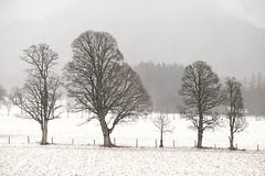 The first snow (Der Reisefotograf) Tags: snow tree fog white landscape snowylandscape