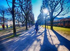 Mirabell Palace and Gardens in Salzburg, Austria (` Toshio ') Tags: toshio salzburg austria europe european europeanunion garden trees woman mirabellpalace mirabellgarden mirabell fujixe2 xe2 path palace soundofmusic