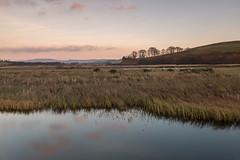 Coquet Valley (martin.ellis) Tags: sunset reeds evening haugh field hepple thropton rothbury rivercoquet coquetdale hepplewhitefield northumberland martinellis martinandjohnphotograpycouk nikon d800 england unitedkingdom