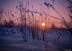 Harmony.. (tferi666) Tags: nature nice best beautiful amazing fantastic night winter sony ilce next aloha a6300 sonyflickraward sonyflickrawardgold 18105mm hungary magyar zemplénhegység naplemente tél gyönyörű ngc