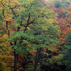 Autumn Painting - Velvia 100 exp* (magnus.joensson) Tags: sweden swedish skåne autumn höst rövarekulan hasselblad 500cm zeiss sonnar cf 250mm fuji velvia 100 exp2007 e6 6x6