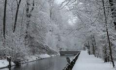 Reiher (arminfellmann) Tags: winter reiher snow schnee langen erlen heron canon