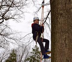 Boy scales tree 2 (Montgomery Parks, MNCPPC) Tags: treeclimbing woodsidepark january2017 2017