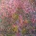In Full Bloom, Acrylic, 76x61 cm $1400.00 AUD