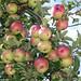 Apfelwein aus der Steiermark - Perfekte Idee - perfekte Finanzierungsform