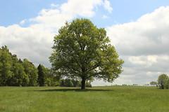 The lonely tree (kkaarlyy) Tags: tree nature germany deutschland im natur lonely grün baum einsam deuts irgendwo allein lichtung nirgendwo