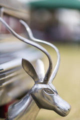 Impala (DoctorTimbo) Tags: car bokeh head horns chevy bumper chrome american modified americana impala polished cheverolet woodcotesteamrally